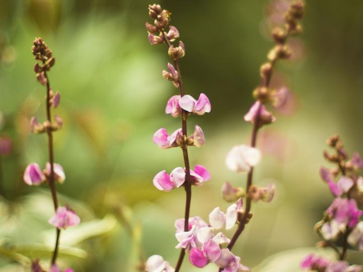 biron flower1
