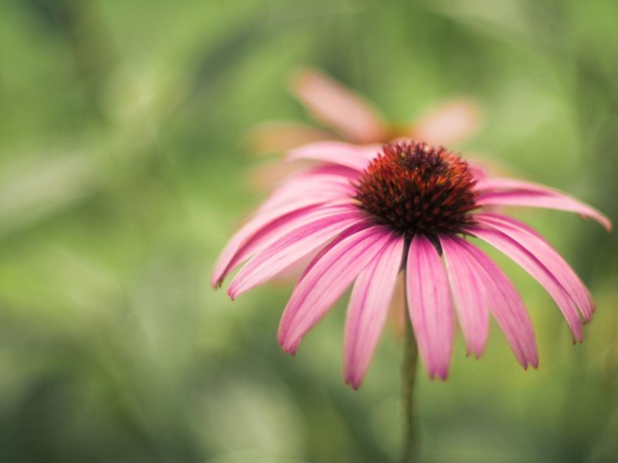 Biron flower2